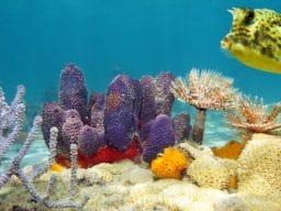 Crociera Sub in Mar Rosso a Agosto