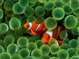 Crociera Sub in Mar Rosso a Settembre
