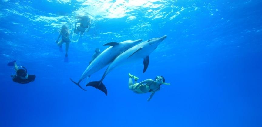 Snorkeling con i delfini alle isole azzorre - Zoomarine bagno coi delfini ...