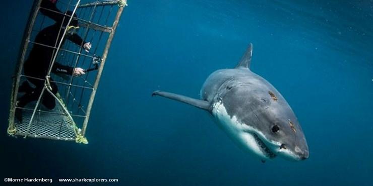 Viaggi per sub in sudarica con avvistamento squali - Bagno con gli squali sudafrica ...