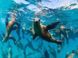 Vacanze diving a Baja California – La Paz