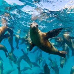 Vacanze diving a Baja California – La Paz