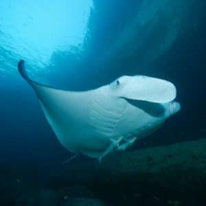 Crociera di Capodanno per subacquei in Oman