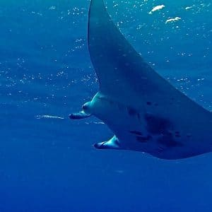 Vacanza diving al Manta Village alle Maldive
