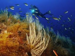 Settimana diving a La Maddalena