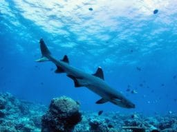 Crociera diving alle Maldive marzo 2017