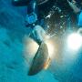 ARCHEO LAB alle Isole Tremiti – week end formativo