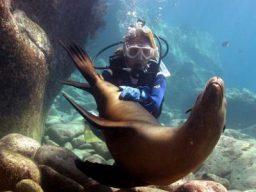 Baja California Diving Expedition – novembre
