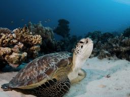 Crociera per subacquei in Oman – Isole Daymaniyat