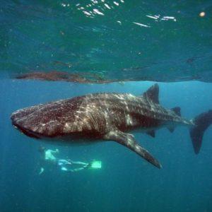Vacanze diving in Mozambico fra mante e squali balena