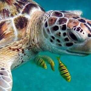 Crociera diving di Natale alle Maldive