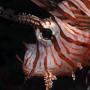 diving_maldive