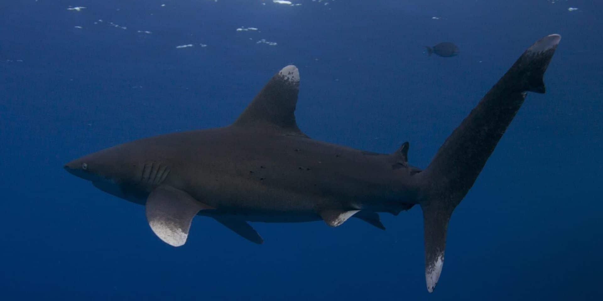 mar rosso: viaggi sub, vacanze e immersioni diving - Soggiorno Mar Rosso 2
