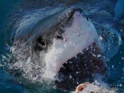 Sud Africa shark experience3