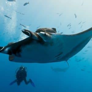 Immersioni diving alle Maldive