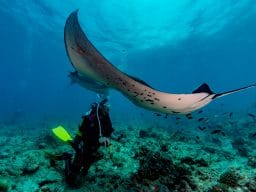 Immersioni diving con le mante alle Maldive
