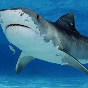 Vacanza diving con gli squali tigre in Sud Africa