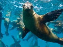 Viaggio diving a Baja California in campeggio
