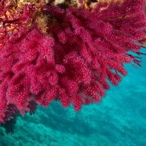 Immersioni subacquee Mediterraneo