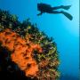 Vacanza diving in Sardegna | Arcipelago La Maddalena (Voli inclusi)