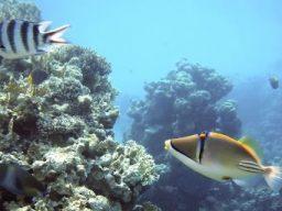 [Luglio] Crociera diving in Egitto nord e Tiran