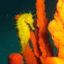 Week end diving a Santa Caterina di Nardò