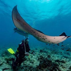 Vacanze diving Maldive