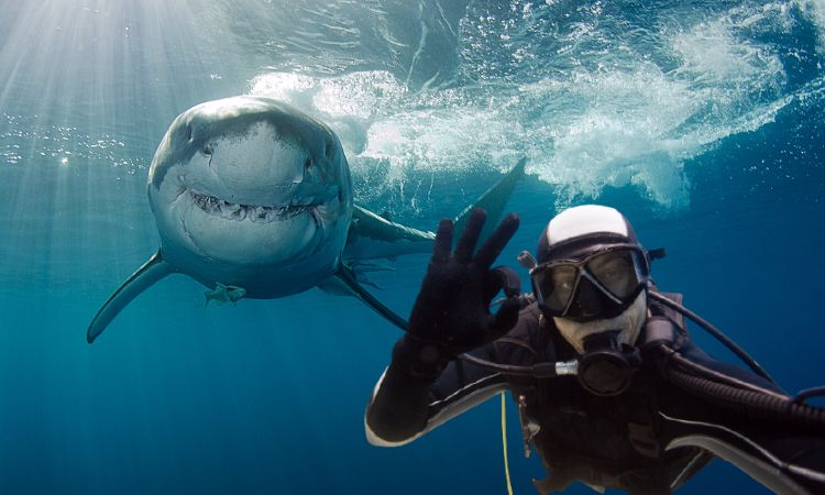Assicurazione subacquea