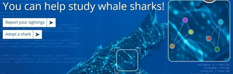 Whale Sharks report sightings