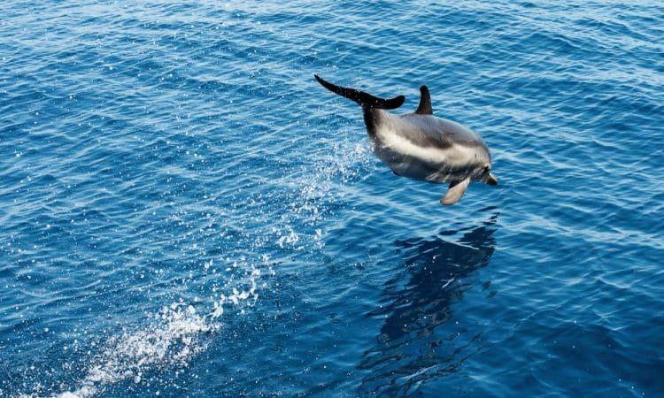 Santuario dei cetacei Pelagos
