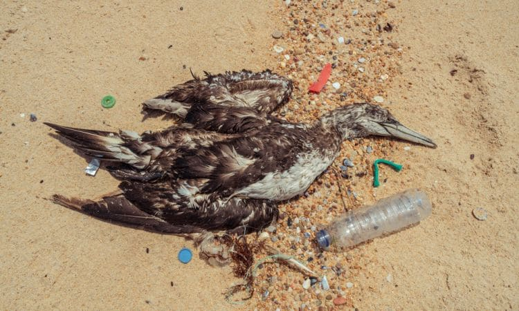 Uccello marino deceduto