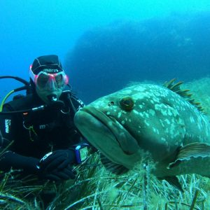 Immersioni Isola d'Elba