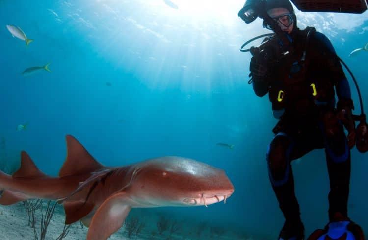 Subacqueo con squalo nutrice