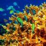 Barriera corallina Maldive