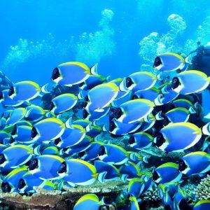 Diving Isola Bandos