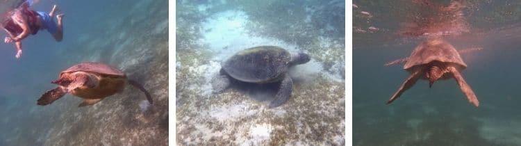 Marsa Mubarak snorkeling