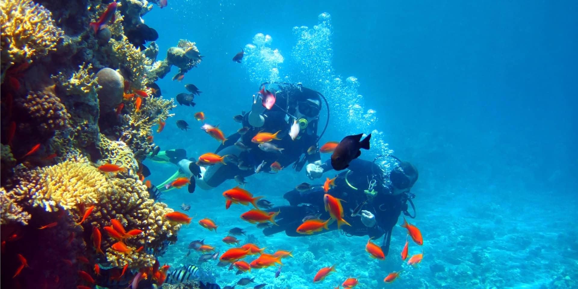 Crociera sub Mar Rosso